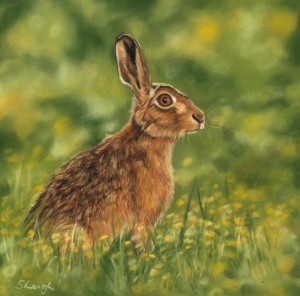 Hare, buttercups, wildlife