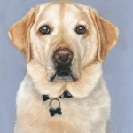dog portrait, pet portrait, pet portraits, labrador portrait, pet painting