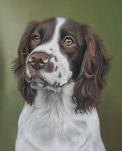 Jessie portrait, dog portrait