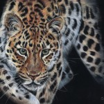On the prowl 16x12 small