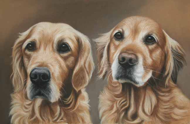 dog portrait, golden retriever dog portrait