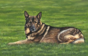 dog portrait, pet portrait, animal portrait
