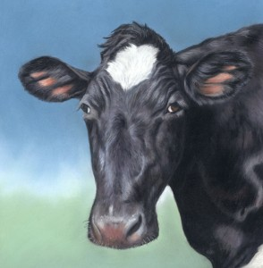 cow portrait, bovine portrait, cattle, portrait