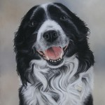 Scrappy Do border Collie portrait