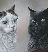 Jolly Splash Pet Portraits