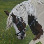 Horse portrait Dylan