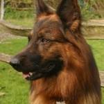 pet portrait photo example
