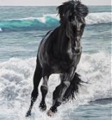 Horse Pet Portraits