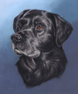 dog portrait, pet portrait, labrador portrait