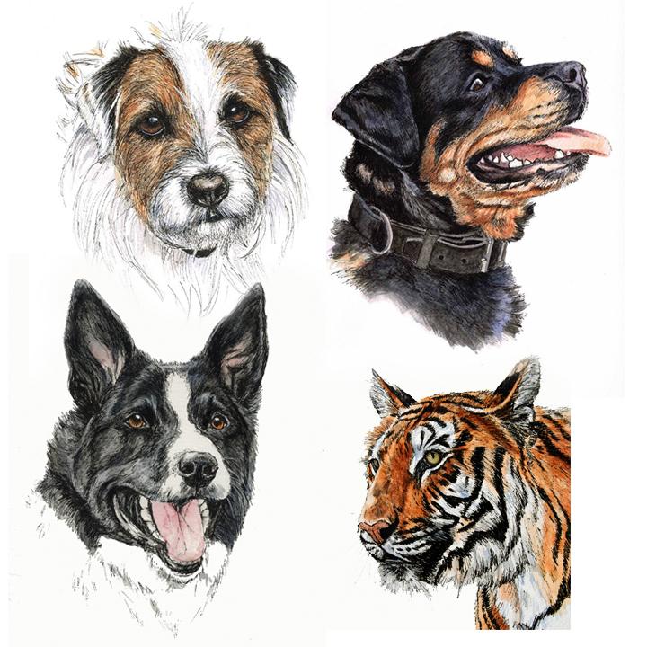 pet portraits, sketch your pet