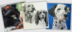 pet portrait samples
