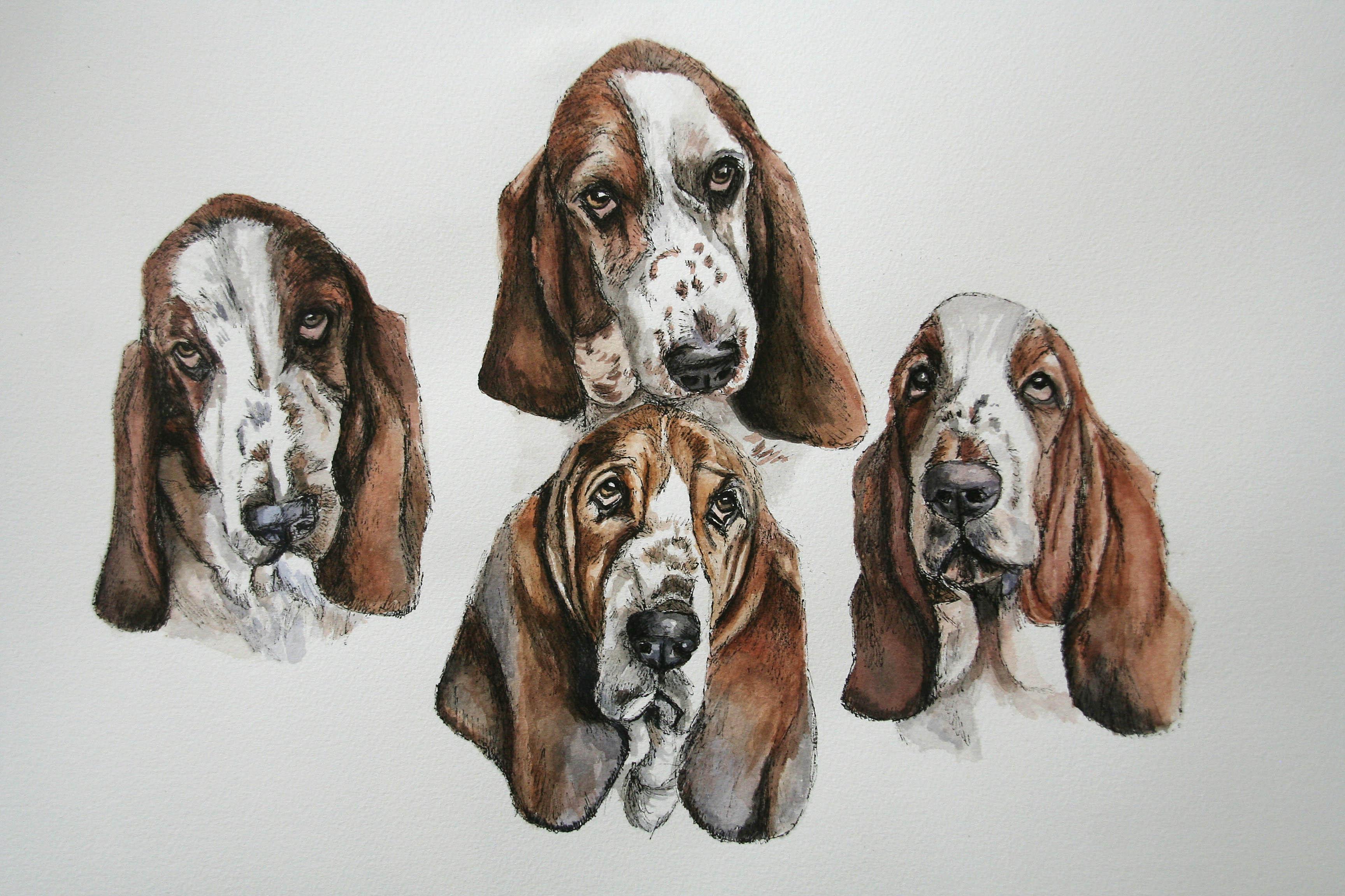 Pen and Watercolour Pet Portraits