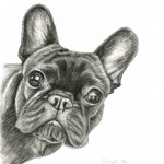 frenchie17052014 small