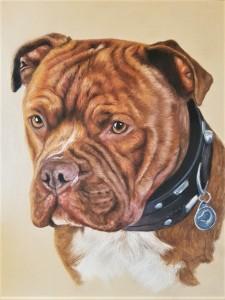 dog portrait, dog painting, pet portrait, pet painting, dog art, pet art, dog portrait gift, pet portrait gift