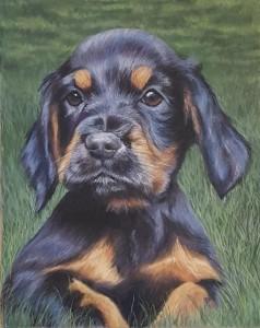 George - cocker spaniel puppy