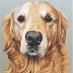 dog portrait, dog painting, pet portrait, pet portraits, pet artist, pet painting, dog art, pastel portrait, pastel painting, pastel pet portrait