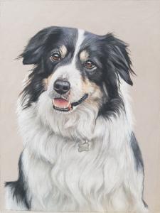 pet portrait, pet portraits, pet painting, dog painting, dog portrait, dog portraits, border collie painting, border collie art