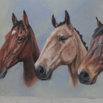 horse portrat, horse portraits, triple horse portrait, equine art, pet portraits, pet portrait
