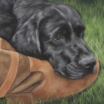 dog portrait, pet portrait, pet portraits, dog painting, dog paintings, dog portraits, dog portrait, black labrador portrait