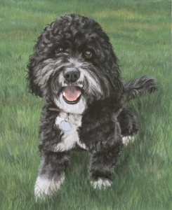 dog portrait, dog portraits, pet portraits, pet portrait, pet painting, pet paintings, pet artists