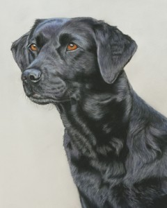 pet portrait, dog portrait, dog portraits, pet portrait, pet portraits, pet paintings, labrador painting, labrador portrait