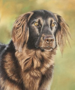 pet portrait, pet portraits, dog portrait, dog portraits, pet artist, pet art, pet paintings, pet painting, dog painting, dog paintings