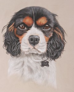 pet portraits, pet portrait, dog portrait, dog portraits, pet painting, pet paintings