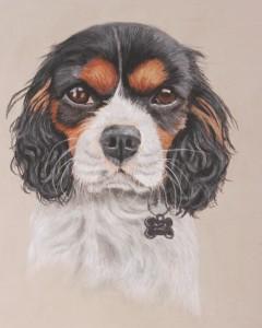 pet portraits, pet portrait, dog portrait, dog portraits, pet painting, pet paintings