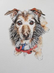 pen and watercolour pet portrait, pet portrait, dog portrait