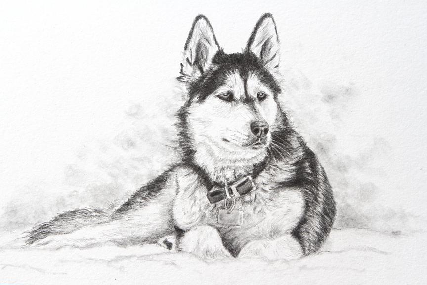 pet portrait, petportraits, pet painting, pet paintings, dog portrait, pet portraits, animal artist, pet artist, dog artist
