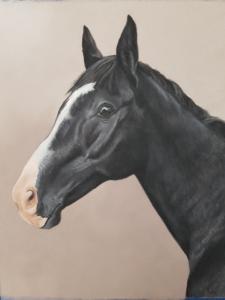 horse portrait, horse portraits, equine art, equine artist
