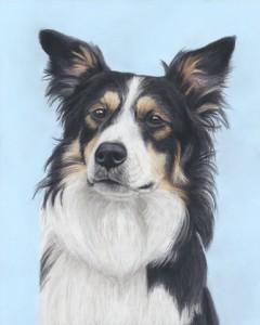 dog portrait, dog portraits, border collie portrait, pet portrait, pet portraits, pet painting, pet paintings, dog painting, dog paintings, dog art, dog artist