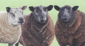 sheep_small a