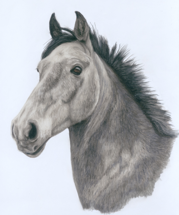 horse portrait, horse portraits, enqune art, equine artist, pet portrait, pet portraits, pet painting, pet paintings