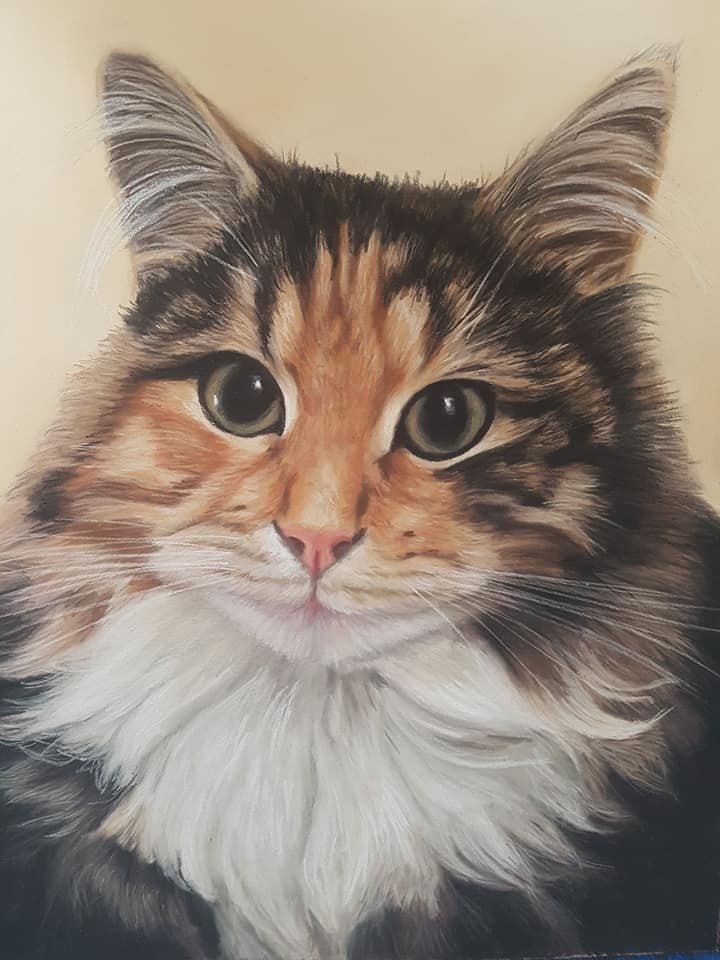 Long haired tabby cat pet portrait in pastels with a golden yellow background