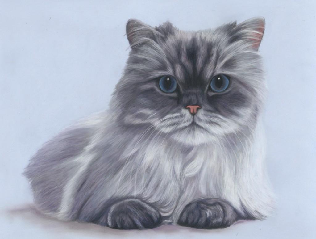 cat painting, cat portrait, cat portraits, pet portrait, pet portraits, animal artist