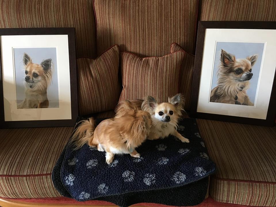 pet portraits, pet portrait, dog portrait, dog portraits, pet painting, pet paintings , animal artist, pet artist, dog artist