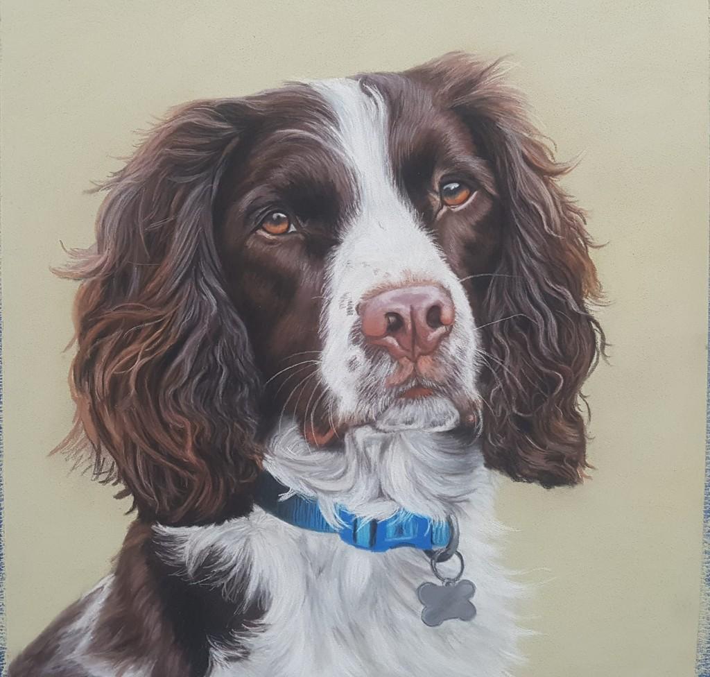 pet portrait, petportraits, dog portrait, dog portraits, pet artist, animal artist