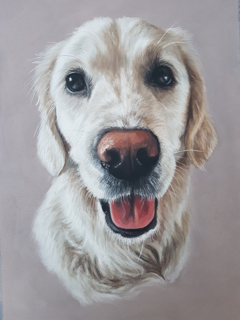 Pet portraits, pet painting, pet paintings, dog portrait, dog portraits