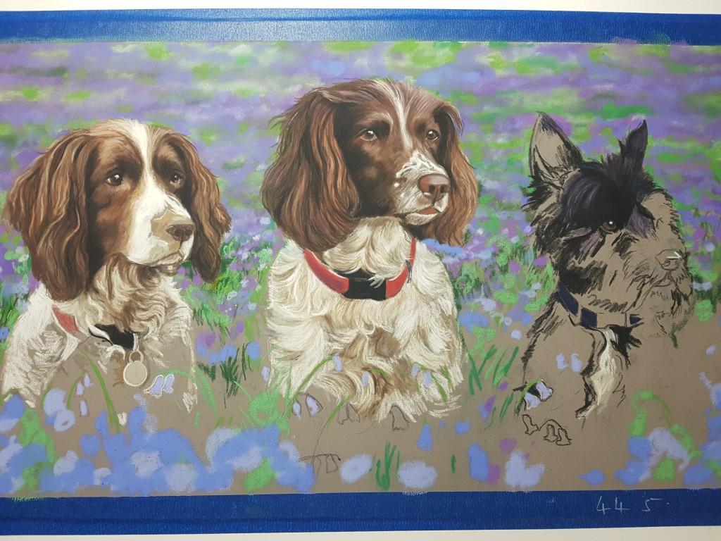 Pet portraits, pet portrait, dog portraits, dog portrait, triple dog portrait, springer Spaniel portrait, schnauzer portrait, pet painting, dog paintings