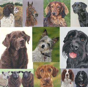 pet portraits, pet portrait,dog painting, dog portrait, dog portraits, horse portraits, horse portrait, pet portrait artist, pet portraits in pastel, pet portraits in pastels, sarahs pet portraits