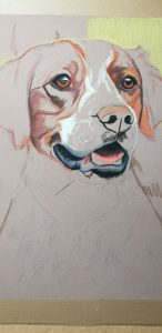 Pet portrait, pet portraits, pet paintings, pet painting, pet paintings UK, pet portraits UK, dog portrait, dog portraits, dog portraitd UK, pastel dog portrait, pastel dog portraits