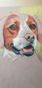 Dog portrait progress photo, pet portrait progress photo