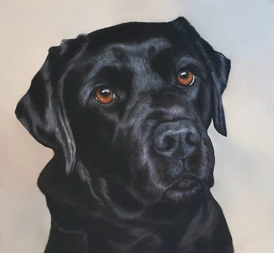 pet portrait. pet portraits, pet portrait uk, pet painting, pet paintings, pet paintings uk, dog portrait, dog portraits, pastel pet portraits, pet portraits in pastel