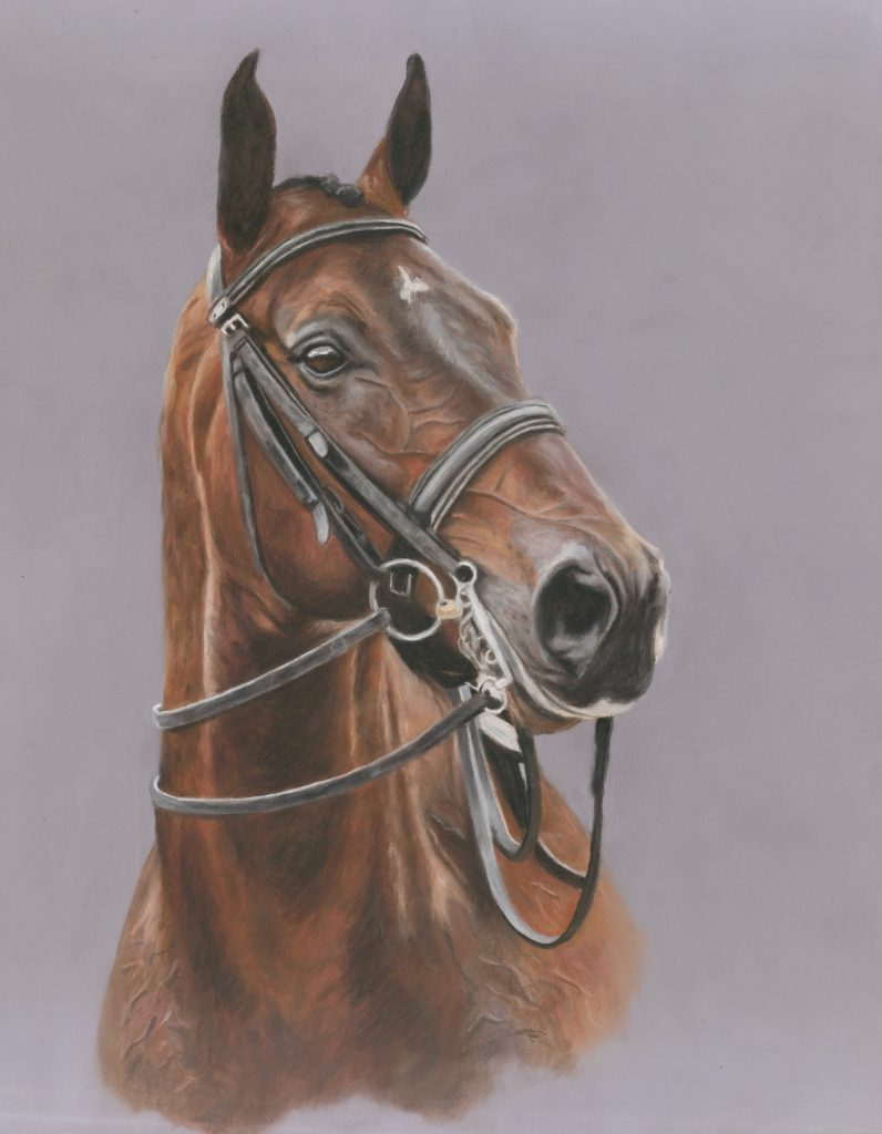 pet portrait, pet portraits, pet painting, pet paintings, horse portrait, horse portraits, horse painting, horse paintings, equine portrait, equine portraits, equine artist, pastel portrait, pastel pet portraits, pet portraits uk, pet painting uk, pastel painting