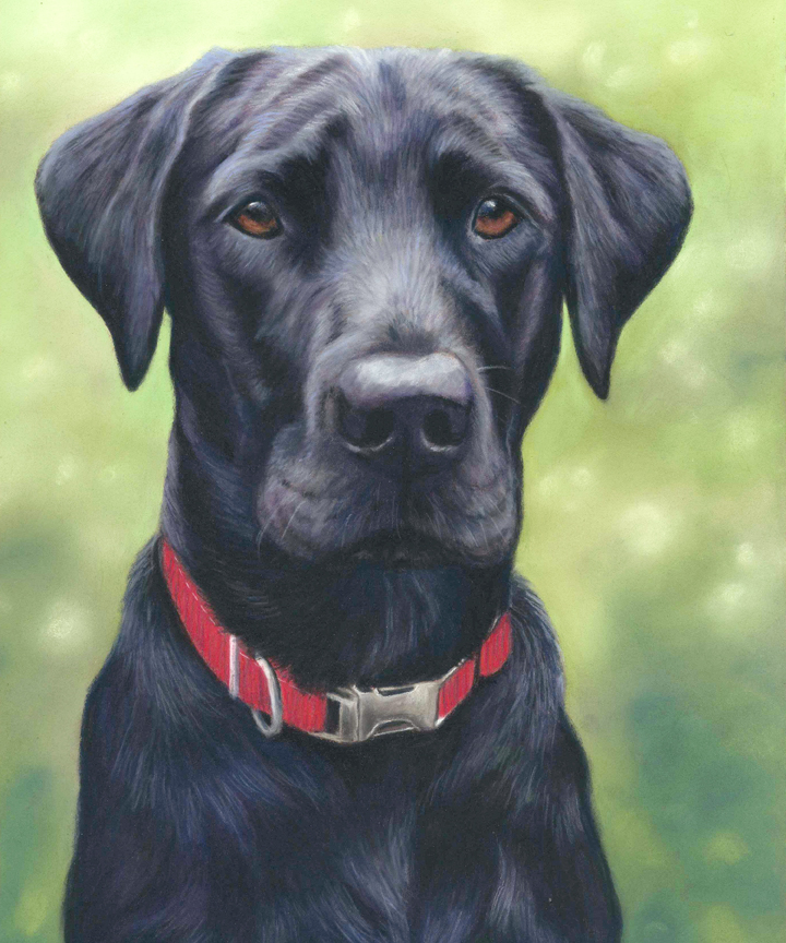 pet portrait, pet portraits, pet painting pet paintings, dog portrait, dog portraits, dog painting, dog paintings, pastel pet portrait, pastel pet portraits, pastel dog portrait, labrador portrait, labrador pet portrait, black labrador pet portrait, labrador pet portraits