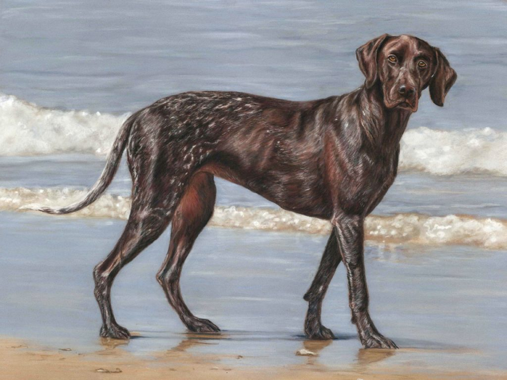 pet portrait, pet portraits, pet paintings, pet painting, pet portrait artist, pet portrait artists, pastel pet portrait, pastel pet portraits, dog portrait, dog portraits, dog pet portrait, dog pet portraits, dog painting, dog painting, dog pet painting, dog pet paintings