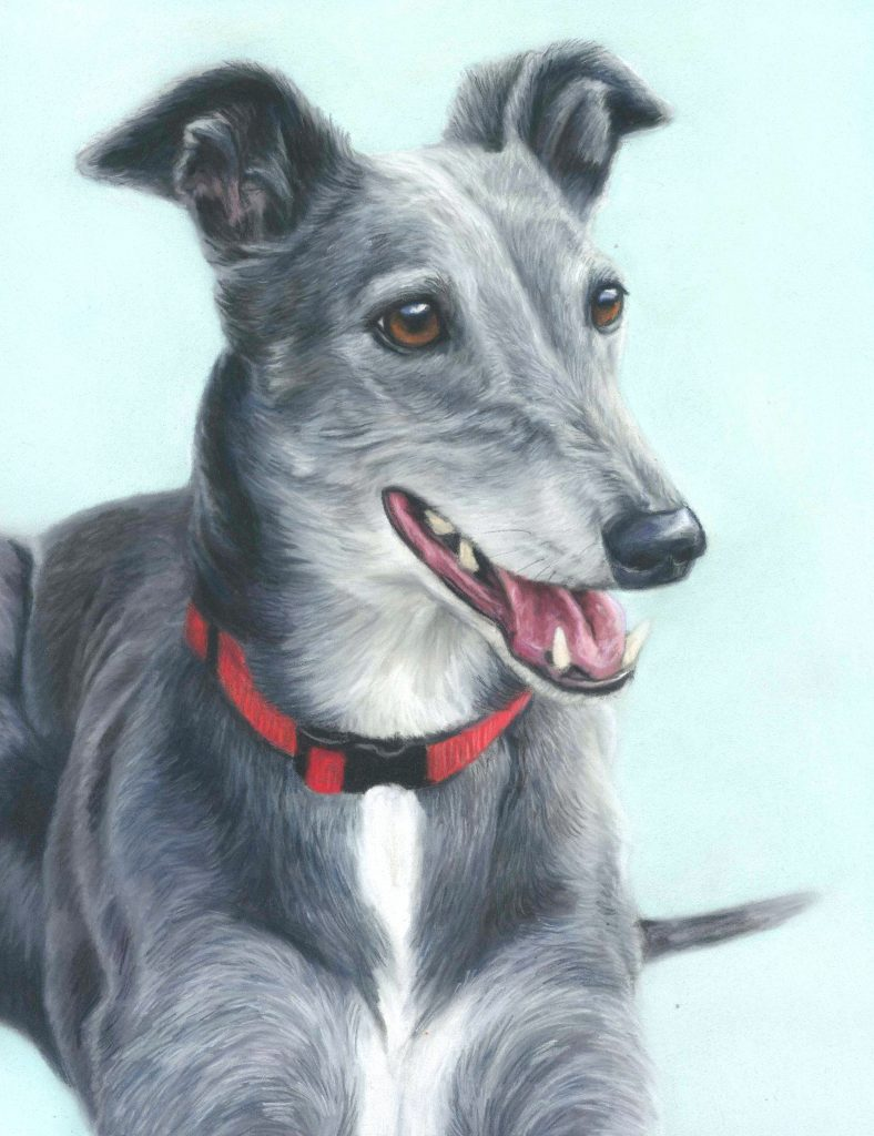 Pet portrait, pet portraits, pastel pet portraits, pastel portrait, dog portrait, dog portraits, pastel dog portrait, pastel dog portraits, pastel portrait, dog artist, greyhound portrait, greyhound pet portrait