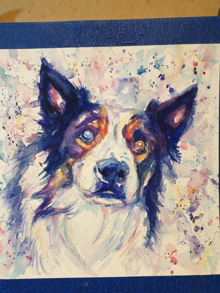Watecolour painting of a border collie in purples, blues, magenta and yellow
