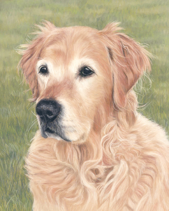Bronte the golden retriever portrait, painted in pastels with a grassy background. 10x12 inches. Ready to be framed